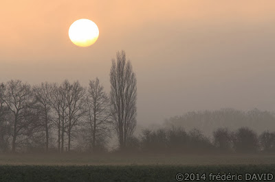 ciel soleil matin silhouettes arbres brume Seine-et-Marne