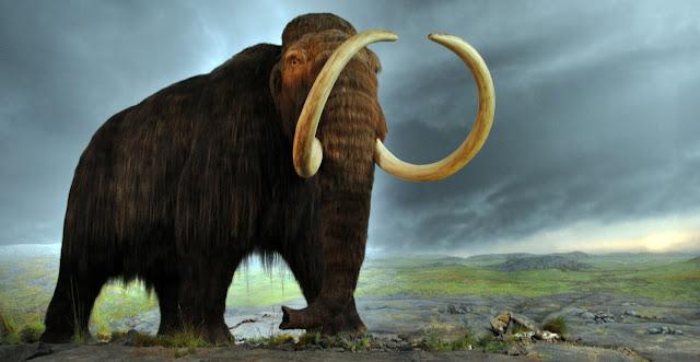 mamut-en-honduras