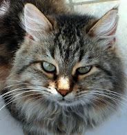 Shabby,un copain de Rubens-