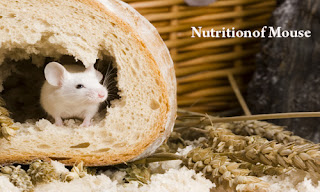 Mouse-Nutrition