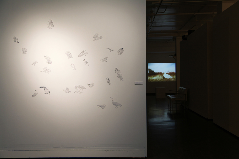 Jillian McDonald, The Birds