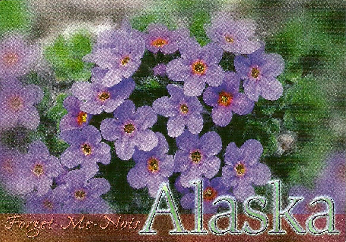 Projek Satu Dunia e World Project ™ USA Alaska State Flower