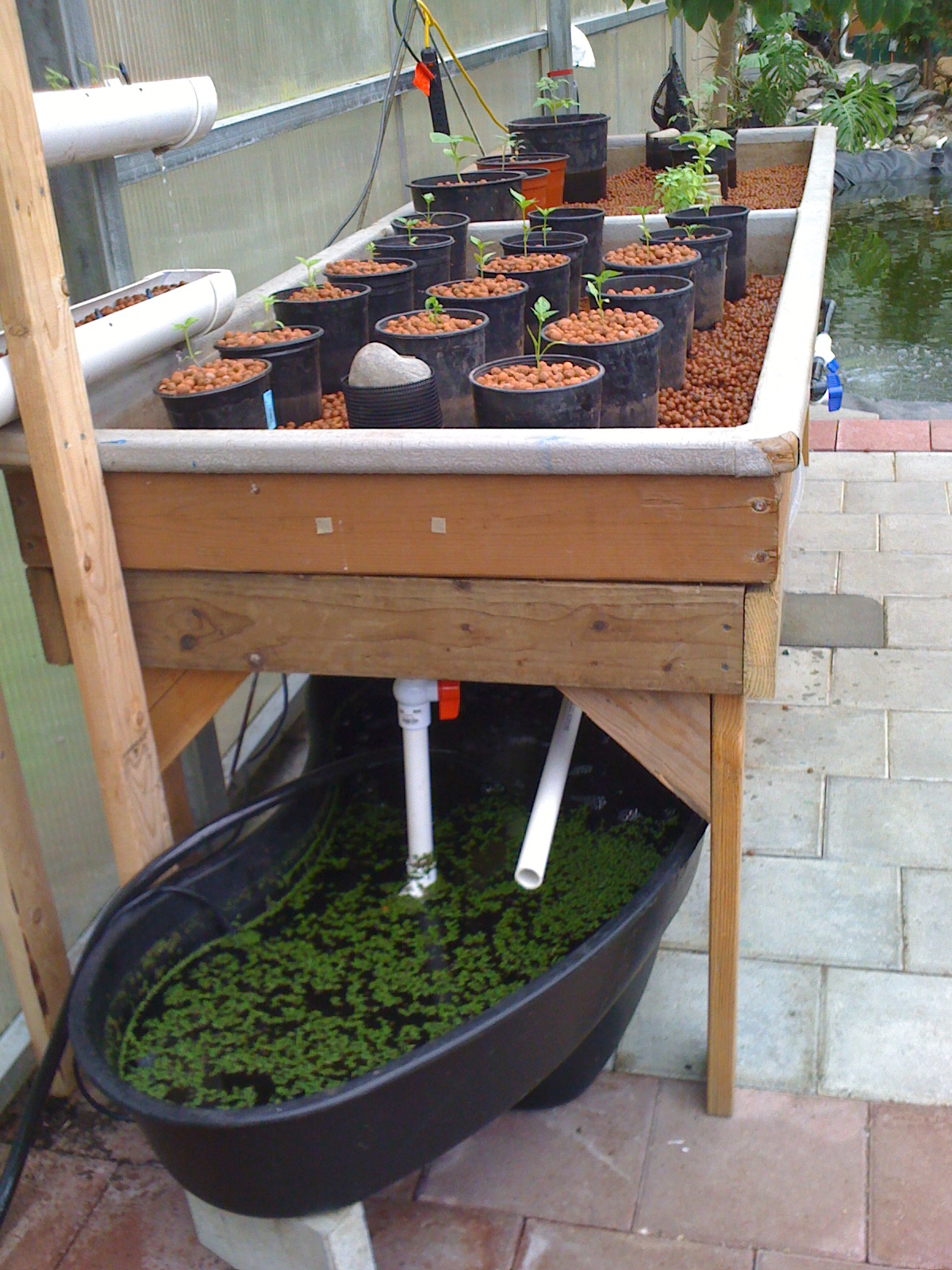 Hydroponics blog healthier food new aquaponics system for Hydroponic grow bed
