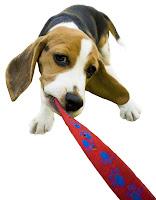 Como adestrar cachorros: O comando Pare!
