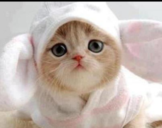 Relativ Images d chaton mignon - Photo de chat XD79