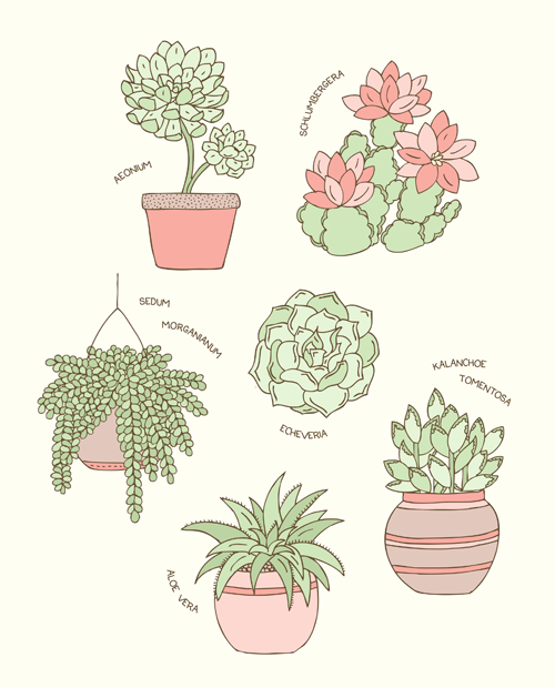 Emma Margaret Illustration Succulents 2015