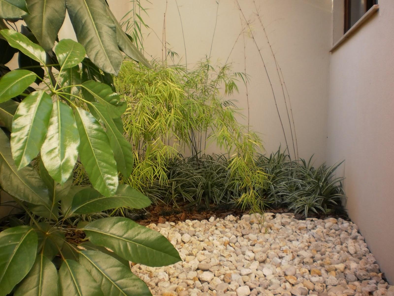 BOTÂNICA  Plantas e Paisagismo Jardins de inverno