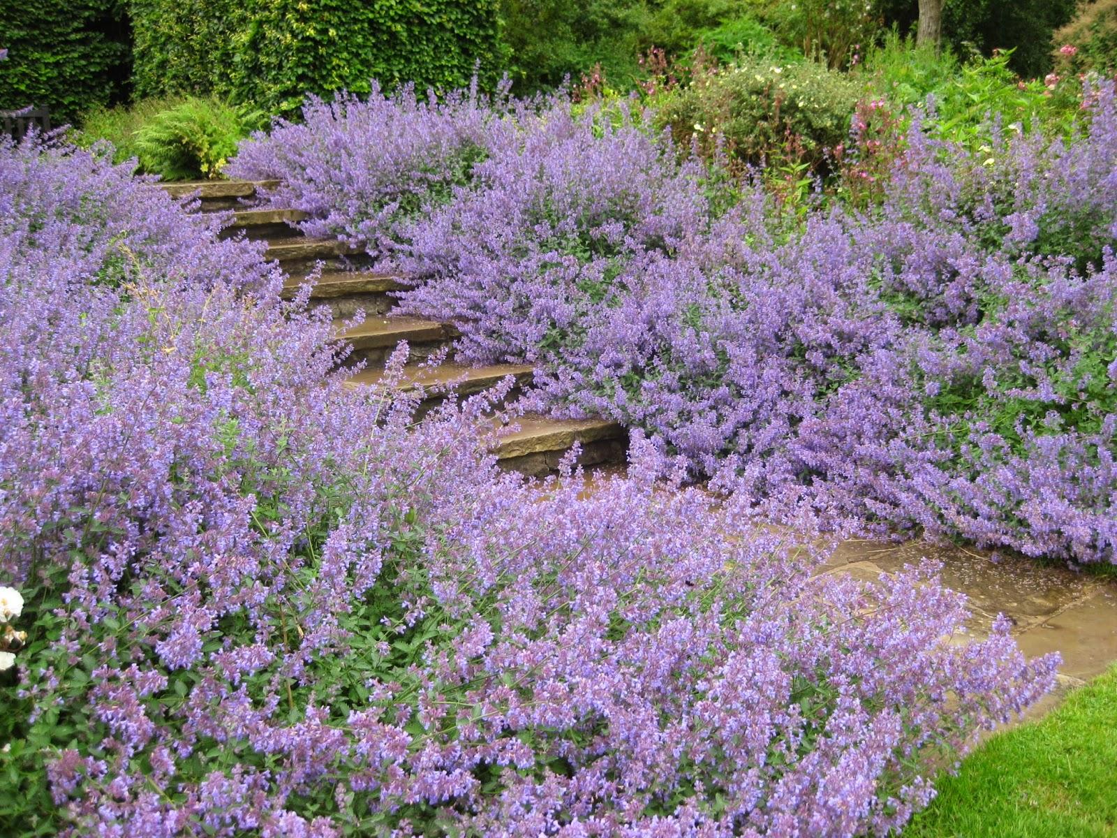 Purple Flowers at Nunnington Hall by Madder Hatter
