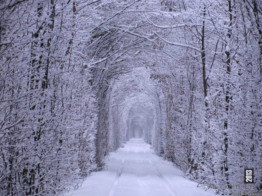 Critter Sitter 39 S Blog The Tunnel Of Love Near Klevan Ukraine