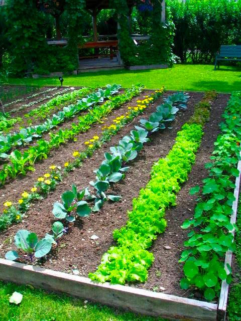 Small Farm Sustainable Living Vegie Patch Examples