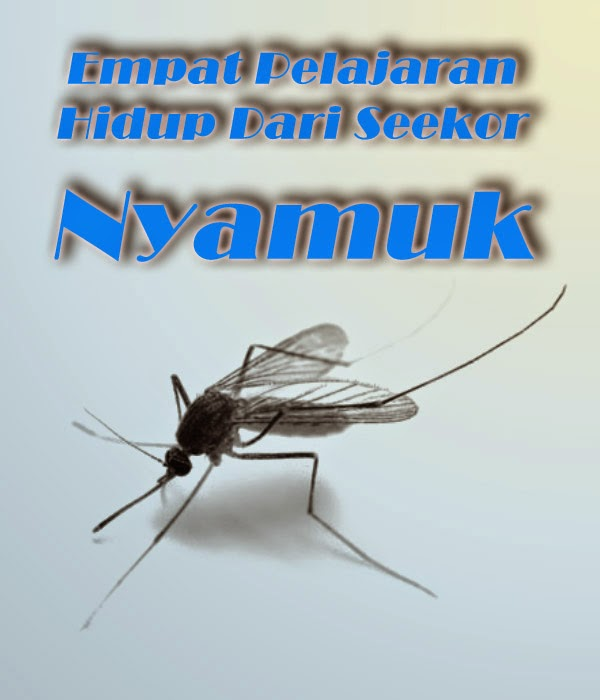 Empat Pelajaran Hidup Dari Seekor Nyamuk