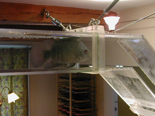 20 Akuarium Paling Unik dan Kreatif di Dunia : Pipeline Fish Tank