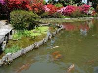 水面には鯉も遊泳し、彩を添える!