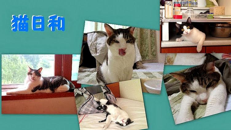 猫と暮らすってどういうことかな