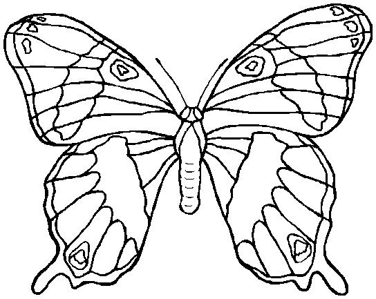 Alas de mariposa para recortar  Imagui