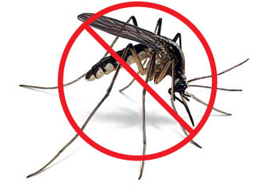 Herbal Health Care 10 Ways How To Prevent Mosquitoes This