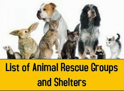 List of Animal Shelters & Rescues, petsnmore.org