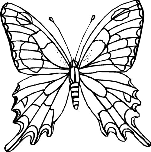 Butterfly Coloring Pages For Kids gtgt Disney