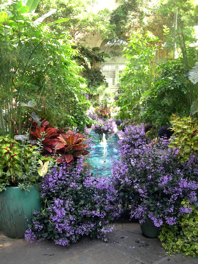 Mad Dabblings In A City Garden: The U.S. Botanic (Potted) Garden