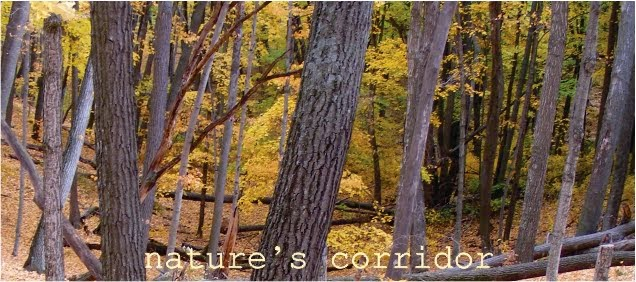 nature's corridor