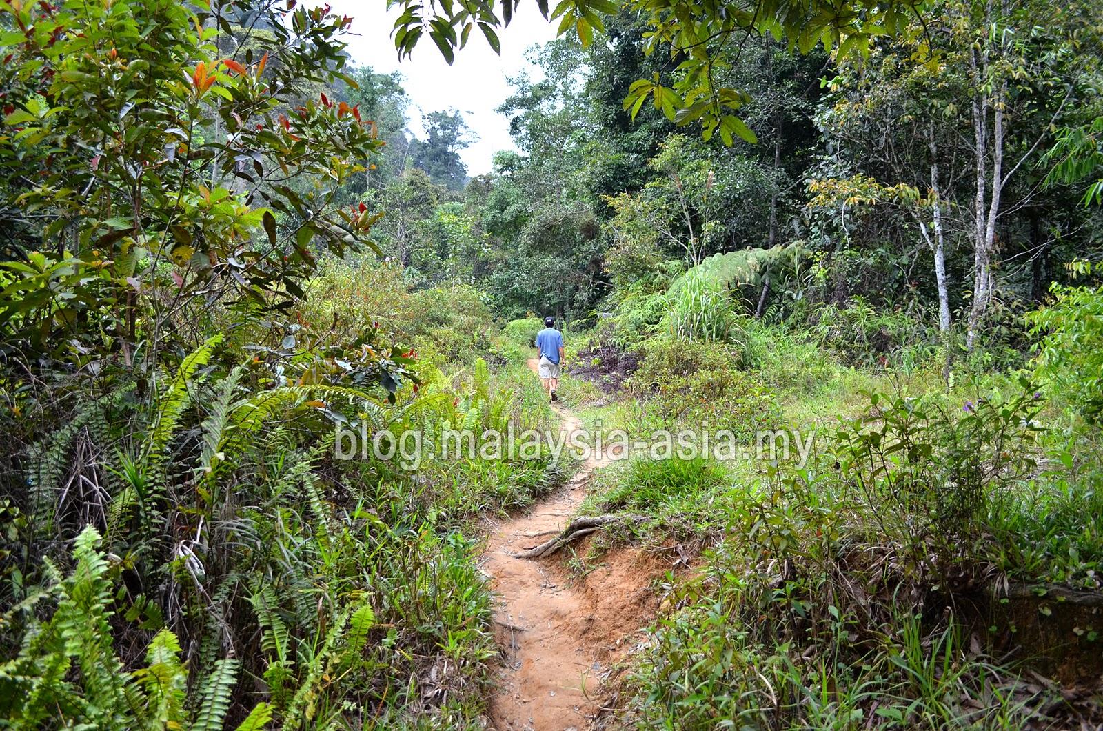 Bario Hiking and Trekking