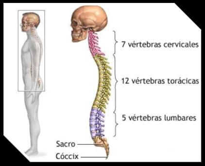 compresion columna vertebral: