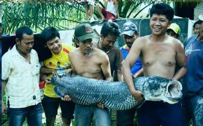 Seekor ikan raksasa yang ditemukan terdampar di DAS Sun