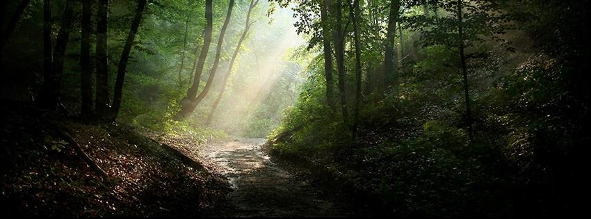 dark forest cover photos   pixshark     images