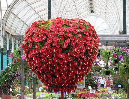 flowering houseplants are a wonderful way to add color to your home they can be difficult to grow but are worth it when cared for many of the plants - Red Flowering House Plants
