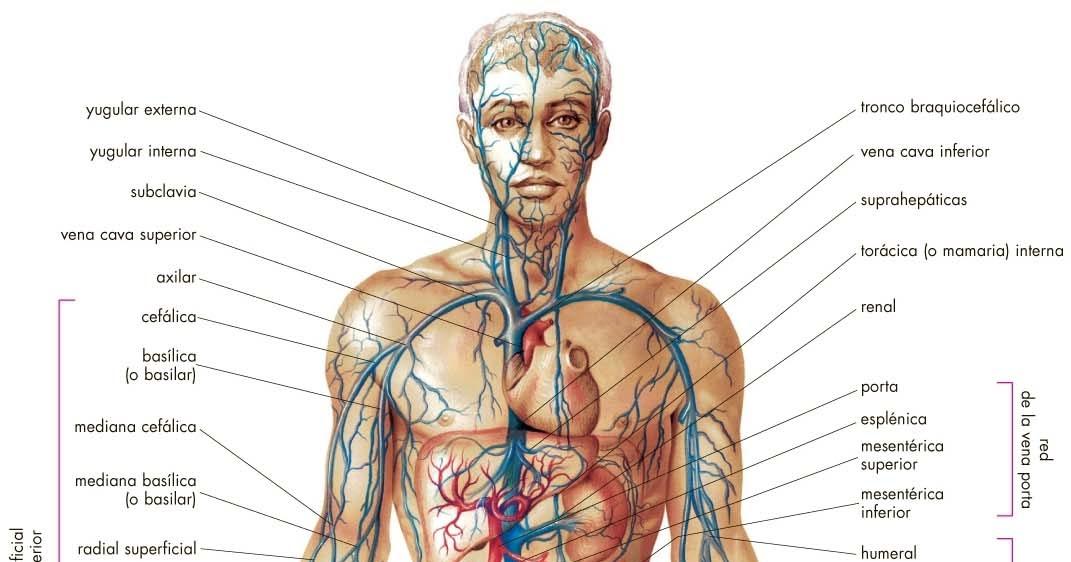 La anatomia humana: Historia de la anatomia