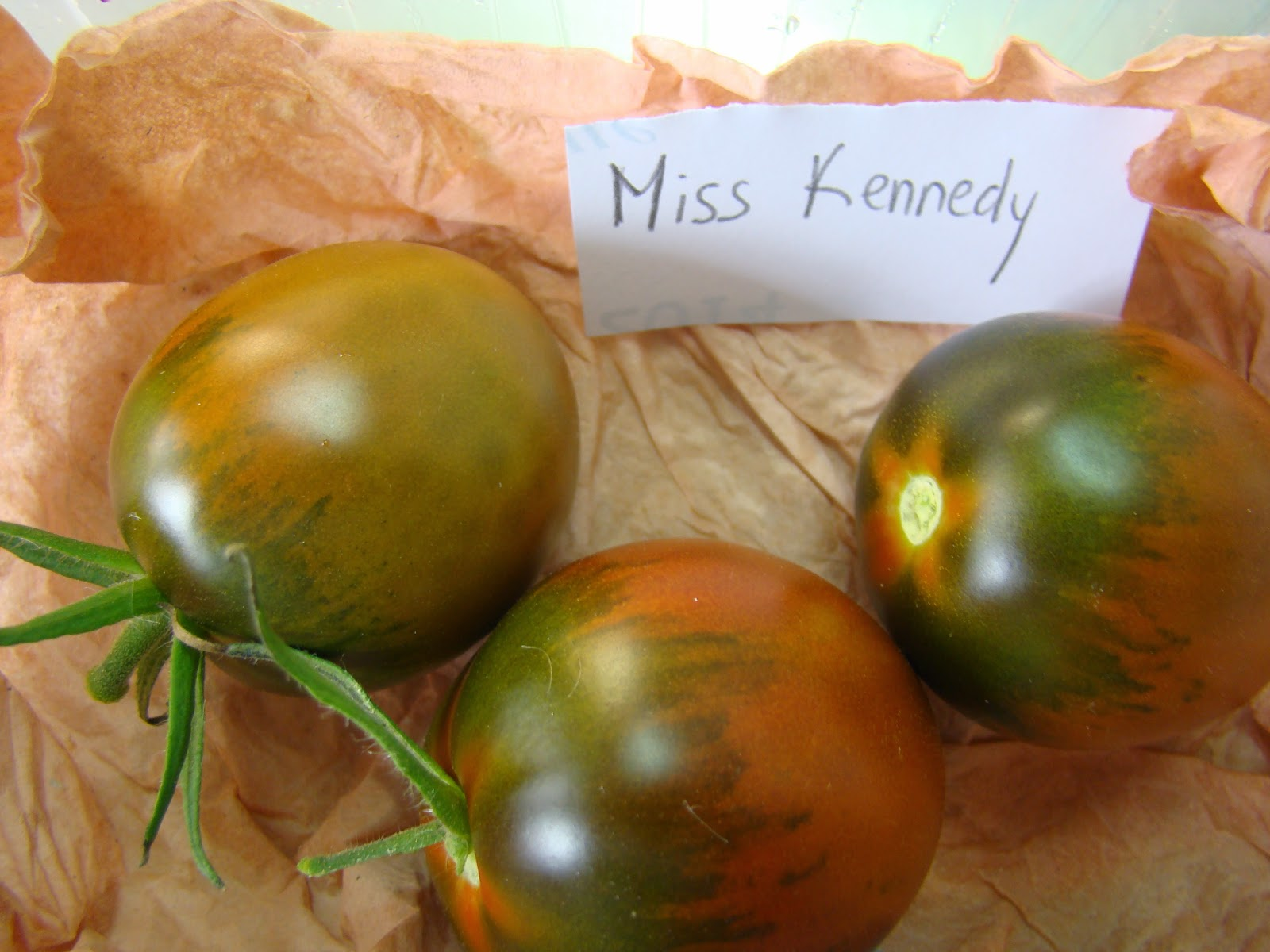 tomate Miss Kennedy troc aux plantes