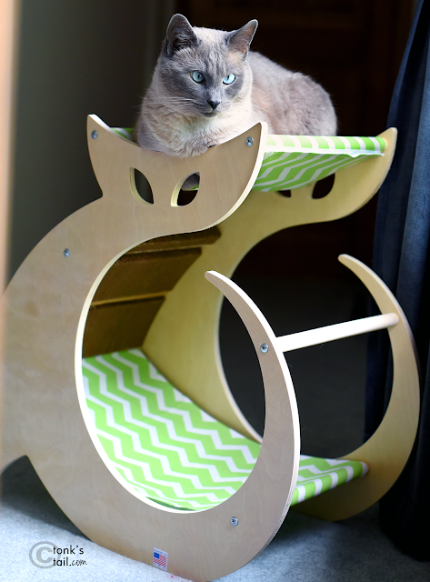 Siamese cat on lounger, cat hammock