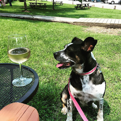 Wineries In Northern Va Dog Friendly