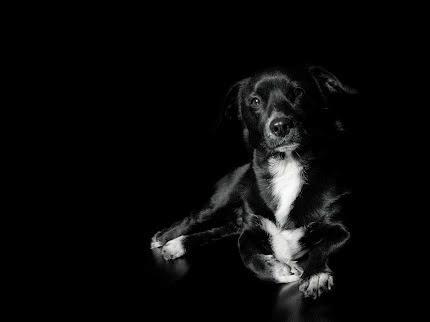 Gambar Anjing Lucu dan Imut