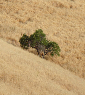Oak and Grass in Granada Hills, Photo (c) 2010 by Maja Trochimczyk