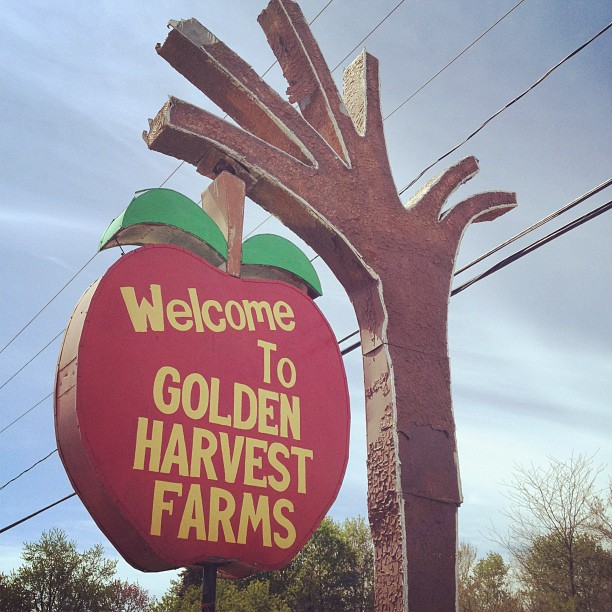 golden harvest farms