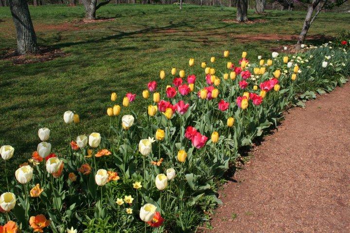 Thomas Jeffersonu0027s Gardens At Monticello In Photos Taken April 15, 2011 .