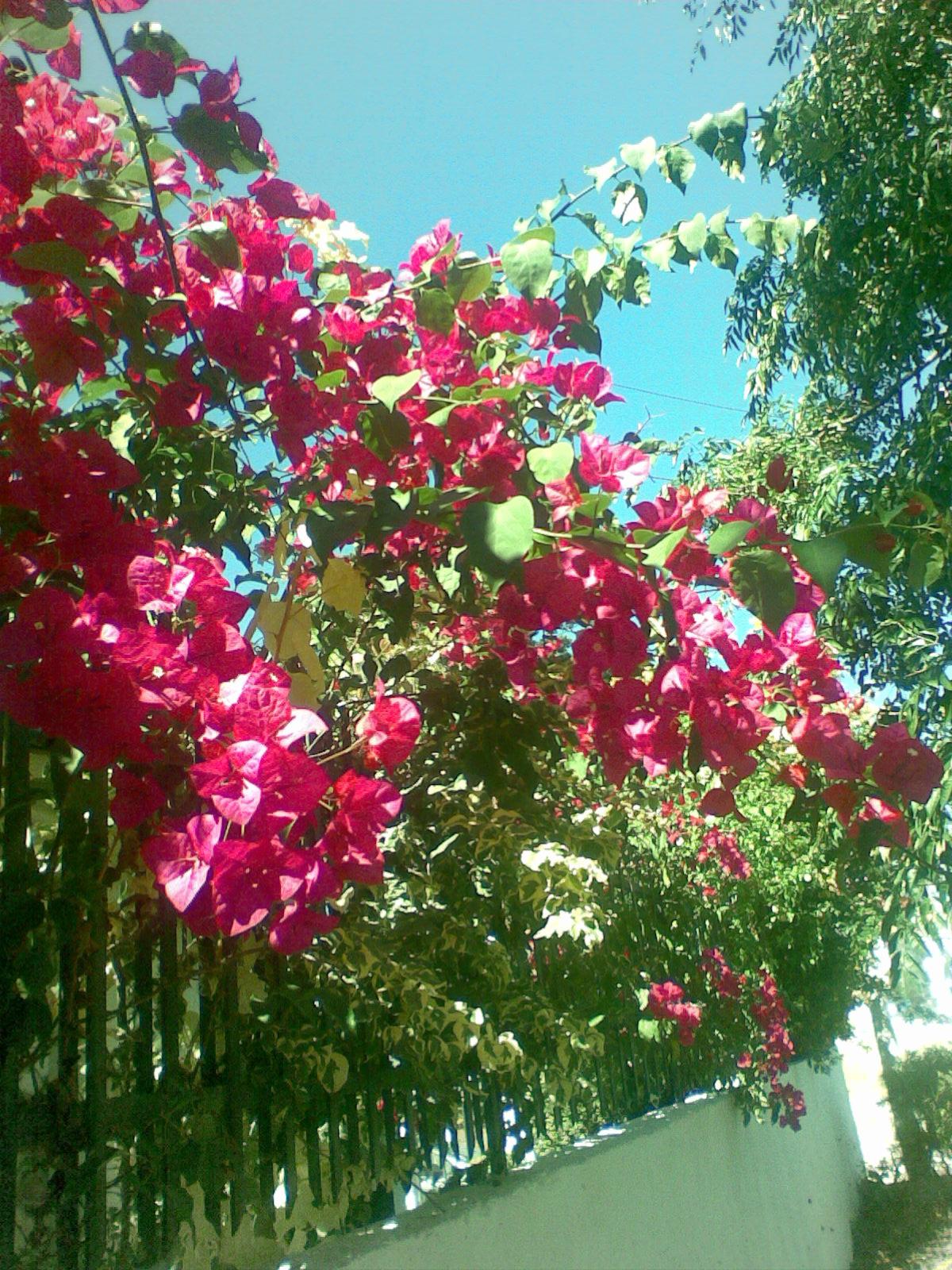 Olvidando caminos flores de verano tard o - Flores de verano ...