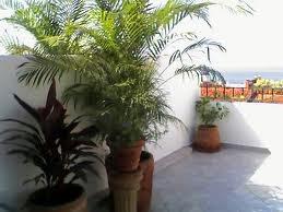 Om plante uit te plant binne na buitenshuis