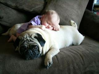 Baby schläft auf Hund