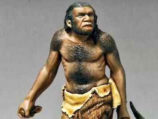 GAMBAR MANUSIA PURBA Homo Wajakersis