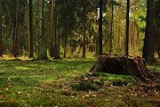 Stary las, stara wieś. (stary las )