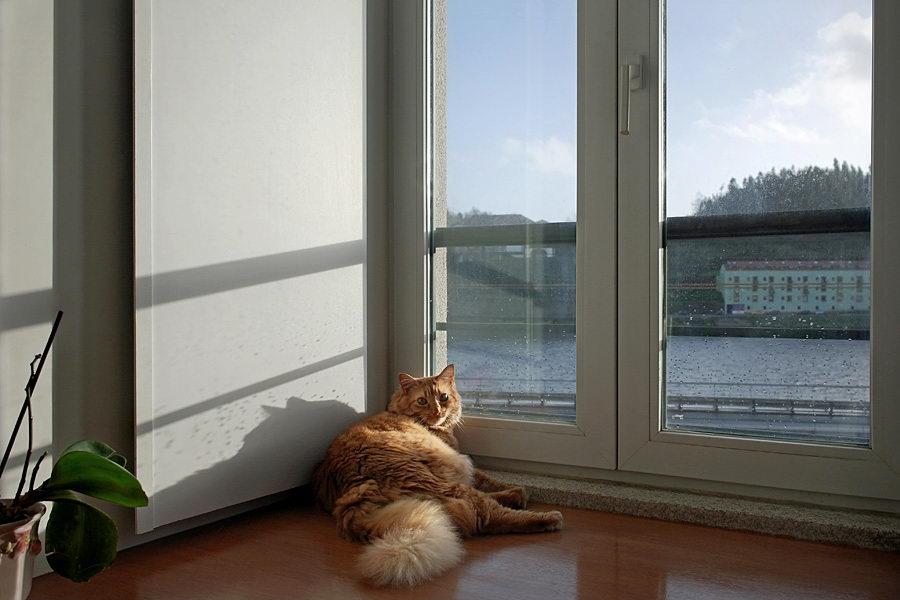 Gato amarelo numa janela com vistas para o rio