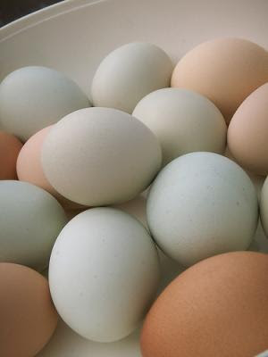counting our blessings: how to tell if an egg is fresh