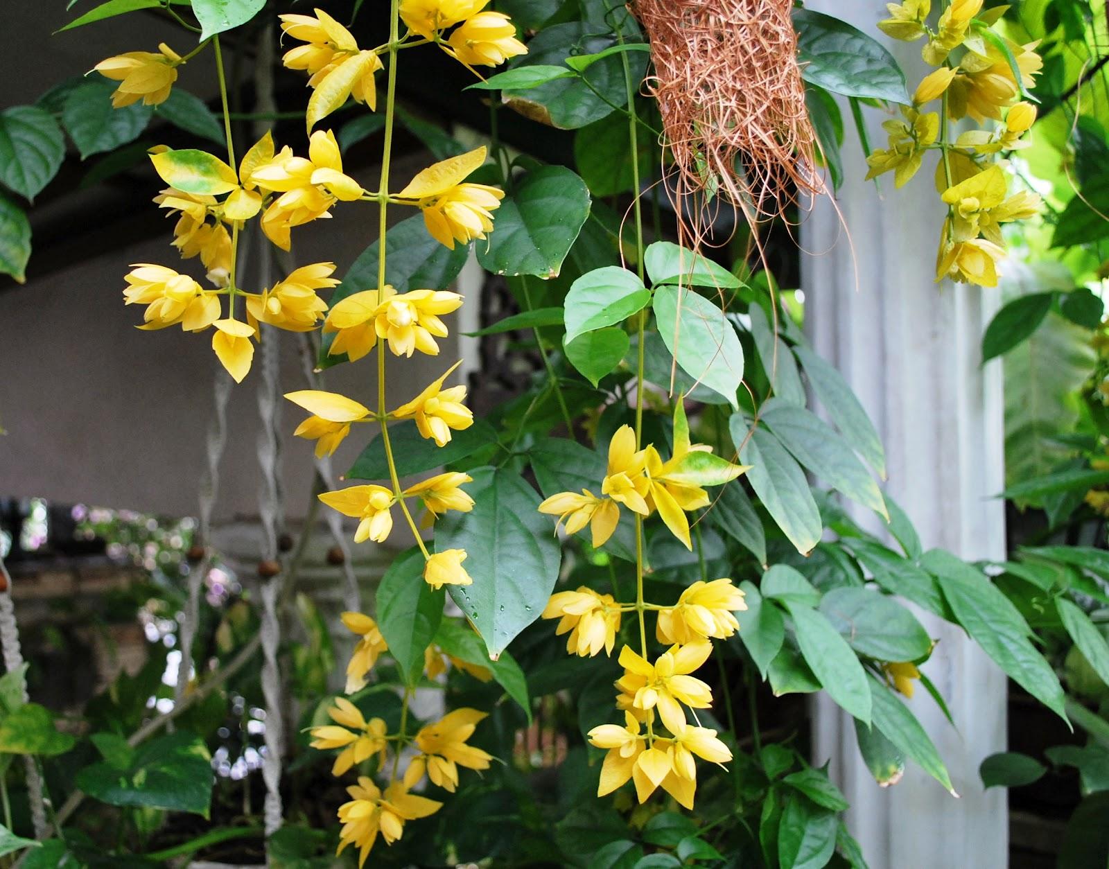 Pak Idruss Blog The Hanging Flowers