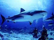 ANIMALES MARINOS EN PELIGRO DE EXTINCIÓN! (fondos animales tiburones )