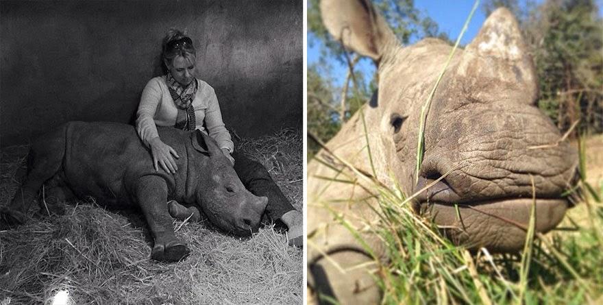 rinoceronte bebe