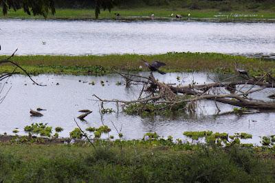 rio canas