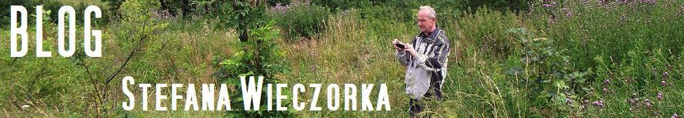Blog Stefana Wieczorka