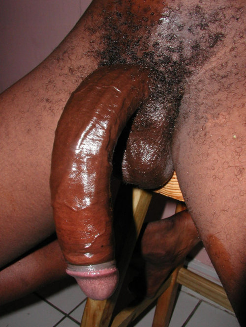 Horny long donkey fucking penis NALGAS...EXQUISITO